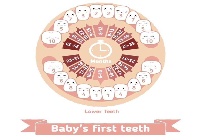 Lịch mọc răng của bé