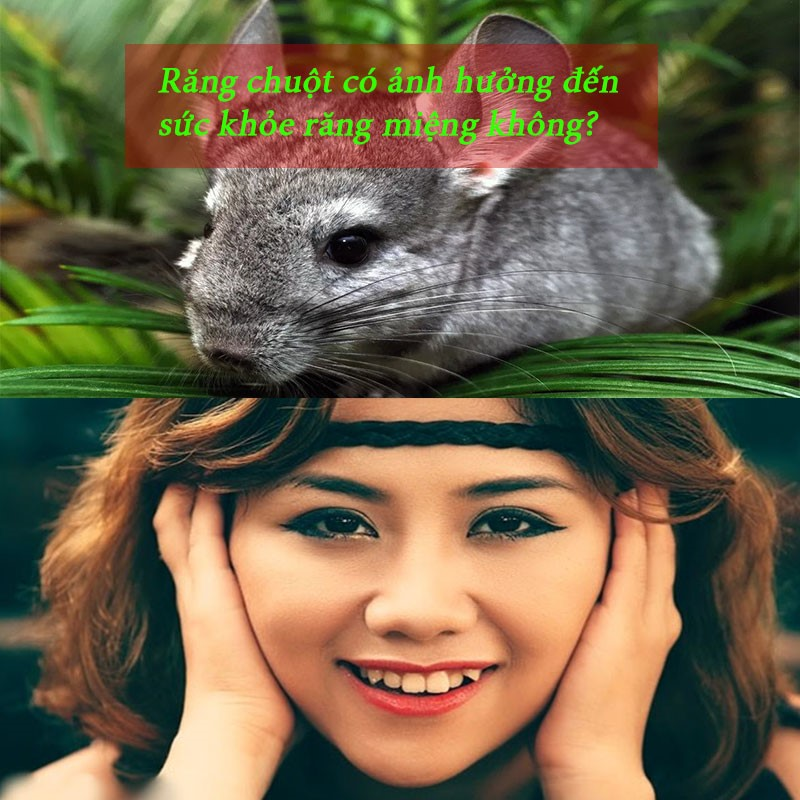 Răng chuột là răng như thế nào?