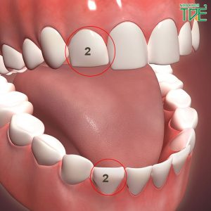 Răng số 2 nằm ở vị trí nào? Mất răng số 2 có ảnh hưởng gì?
